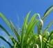 NEMOKAMAS seminaras - Kiek verta biomasė?